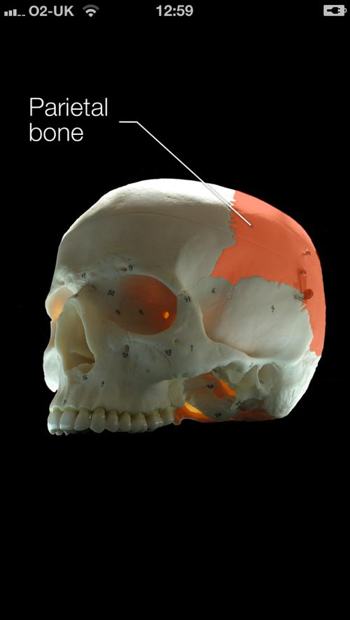 Skull Iphone 2